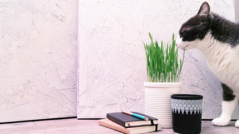 DIY Pot déco pour herbe à chat