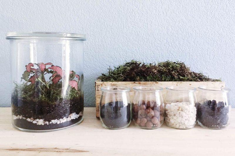 DIY Terrarium tropical pour plante verte
